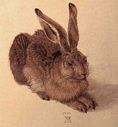 Hase, Albrecht Dürer