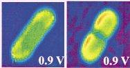 Ein CO-Molekül auf einer Au-Kette (ohne: links, mit: rechts)